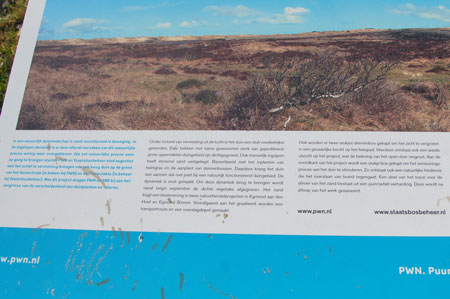 There are a few areas in the dunes with only sand. For this reason, they have cut down trees. (Explanation on the board in Dutch)