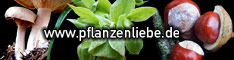 The green picture gallery  / Pflanzenliebe  A German site. Nature photography for print, web and much more! The Green Picture Gallery for plants indoor and outdoor, in forest and garden, meadow and field, botanical garden and in the house.